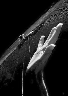 Fade To Black, Black And White, Web Gallery, Gothic Aesthetic, Coraline, In The Flesh, Picture Wall, Creatures, Dark