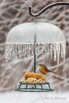 Beautiful bird feeder for winters!