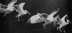 A chronophotograph by Étienne-Jules Marey