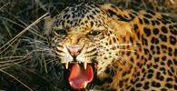 Wildlife - Bandhavgarh National Park