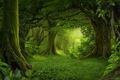 forest - Google Search Scenery Photography, Background For Photography, Photography Backdrops, Background Images, Photo Backdrops, Forest Photography, Muslin Backdrops, Vinyl Backdrops, Custom Backdrops
