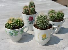 https://www.facebook.com/pages/Im7Himmel/533724243386442 #cactus #theekopje #plants #teacups