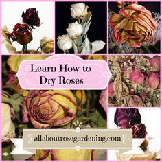 Make crafts with Dried Roses! http://www.allaboutrosegardening.com/Drying-Roses.html