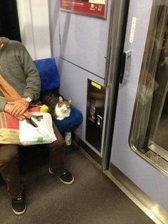 電車猫*☆*Train cat