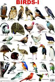 list of sea animals - Google Search