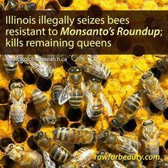 "OUTRAGE: Illinois Illegally Takes, Kills Farmer's ""ROUNDUP""-RESISTANT Bees! Why???"