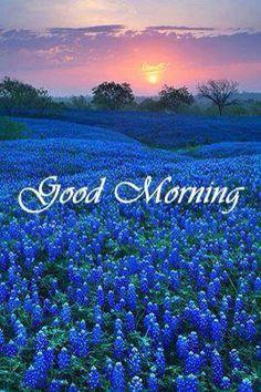 Beautiful Morning Quotes, Cute Good Morning Quotes, Good Morning World, Good Morning Picture, Good Night Quotes, Good Morning Good Night, Morning Pictures, Good Morning Wishes, Good Morning Images