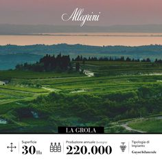 Allegrini's La Grola vineyard is renowned for its preeminent geographical position, the distinctiveness of land and the impressive quality of the grapes produced.