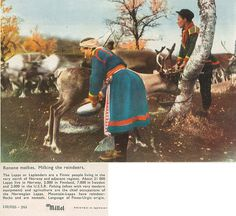 1000+ images about SAMI OR SAAMI PEOPLE,INDIGENOUS PEOPLE ...