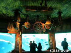 South Africa trip journal: Under the sea at Durban's uShaka Marine World Greatest Adventure, Sea World, Ocean Life, Snorkeling, Scuba Diving, Under The Sea, South Africa, Aquarium, Beautiful Places