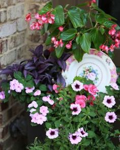 Plants: Dragon Wing® Pink begonia (Begonia Dragon Wing® Pink, annual) Persian shield (Strobilanthes dyerianus, Zones 9-11) Petunia (Petunia cv., annual) Tuberous begonia (Begonia cv., Zones 12-13) Impatiens (Impatiens walleriana cv., annual)