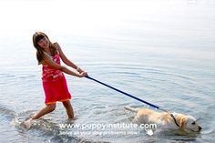 The right mindset and attitude for leash training your dog Leash Training, Training Collar, Training Your Dog, Best Big Dog Breeds, Most Popular Dog Breeds, The Art Of Flight, Flying Dog, Animal Medicine, Dogs Of The World