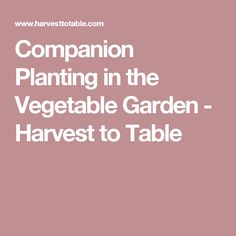 Companion Planting in the Vegetable Garden - Harvest to Table