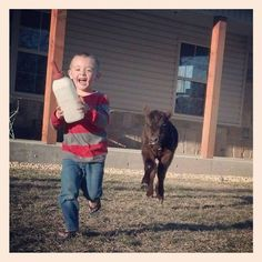 Calf feeding time in the country! Just so adorable! Farm Animals, Funny Animals, Cute Animals, Animal Jokes, Farm Kids, Show Cattle, Future Farms, Showing Livestock, Little Cowboy