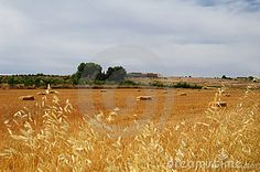 Summertime colours, Harvest time in Spain in a wheat field