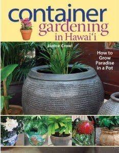 A Kitchen Garden in Kihei Maui: Growing Awapuhi Pake - Culinary Ginger