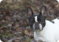 10 Adorable Pets Up for Adoption