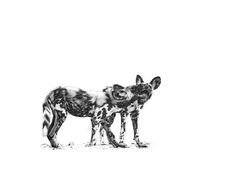 BW fine art wildlife image of wild dog pups playing by Dave Hamman African Wild Dog, Wild Dogs, Animal Sketches, Hyena, African Animals, Illustration Art, Animal Illustrations, Wildlife Art, Animal Prints