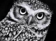 Image result for pastel art owls