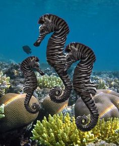 Sea horses have distinct paterns of their very own.