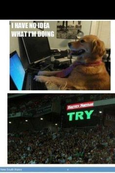 NRL Memes lol this is so true. Nrl Memes, Rugby Memes, Sports Memes, Rugby Gear, Rugby League, Funny Pictures, Funny Pics, Lol, Football