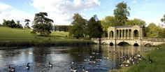 Geese on water with the Palladian Bridge in the background at Stowe. Stowe, Buckinghamshire, England.
