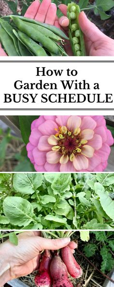 Don't feel like you have time to garden? I get it! Find out the TWO STEPS I took to garden while working full-time, going on weekend getaways and long vacations, and start gardening despite your busy schedule.