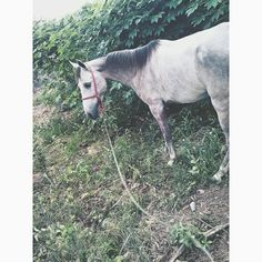 Cavalo Horse Nordestino ❤