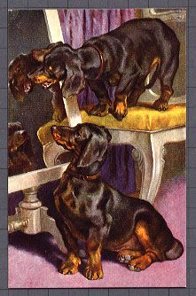 Dachshunds on Vintage Postcards