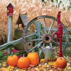 Old wagon wheel with pumpkins and water pump. ---Cute idea for fall display by my fence.