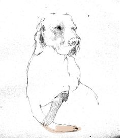 The 365 Dog Project. Love this concept.