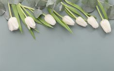 Download wallpapers white tulips, spring flowers, gray background, floral background, white flowers
