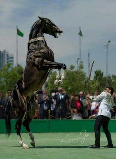 Ahal-Teke Turkmen Horse