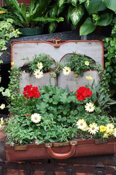 Flowers in vintage suitcases