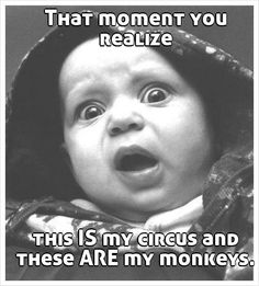 That moment you realize this IS my circus and these ARE my monkeys.