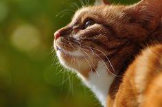 Альбом «*Мои любимые коты Кокос и Кузьма!!!» :: Виталий Виницкий – ФотоКто