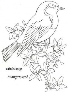 Song Sparrow Coloring page Bird Coloring Pages, Coloring Books, Painting Patterns, Fabric Painting, Bird Template, Bird Sketch, Bird Embroidery, Bird Patterns, Bird Drawings