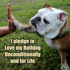 Baggy Bulldog Rescue Nederland