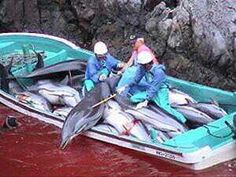 Thousands of dolphins and porpoises are slaughtered in Taiji, Japan each year. The water in the cove runs red with all their blood.