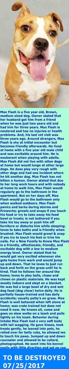 Manhattan Center My name is MAX FLASH. My Animal ID # is A1118677. I am a neutered male brown and white amer bulldog and boxer mix. The shelter thinks I am about 5 YEARS old. I came in the shelter as a OWNER SUR on 07/16/2017 from NY 10472, owner surrender reason stated was CHILDCONFL. http://nycdogs.urgentpodr.org/max-flash-a1118677/