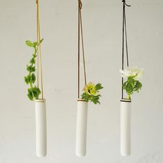glass wall vases w/long cords (more relaxed)