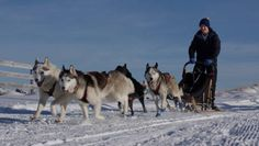 Dog sledding should be on the bucket list of every dog lover.