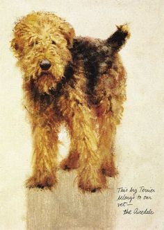 vintage dog pictures   Airedale Terrier Print - Rien Poortvliet - Click to Enlarge