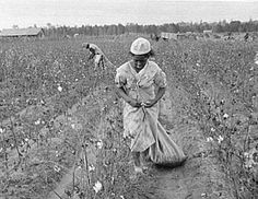 Picking Cotton in Texas 1920s | History interesting facts ...