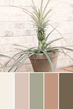 Color Palettes: Potted Plants - This Growing Home