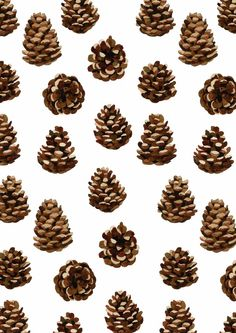 Pine Cone Pattern Woodland Prints - Sophie Brabbins