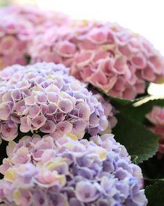 *紫陽花* 色の変化が楽しめるマジカルシリーズ♩ 素敵な紫陽花に出会えました! ————————————— Location : 奈良県 (Nara Japan) ————————————— #ファインダー越しの私の世界 #写真好きな人と繋がりたい #花好きな人と繋がりたい #東京カメラ部 #単焦点 #ザ花部 #はなまっぷ #私の花の写真 #花マクロ部 #tokyocameraclub #flowers #flowerstagram #lovely_flowergarden #wp_flower #flowerslovers #photography #igersjp #pics_jp #Airy_pics #beautiful #ig_color #japan_daytime_view #ig_japan #team_jp_ #wu_japan #icu_japan #macrophotography http://gelinshop.com/ipost/1514900039289121092/?code=BUGAY84DalE