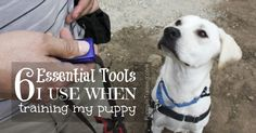 The 6 Essential Tools I Use When Training My Puppy