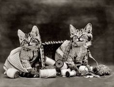"Cute as a Button: 1914. ""Costumed kittens with thread and scissors in overturned sewing basket."" Photo by that auteur of feline folderol, Harry W. Frees. View full size."