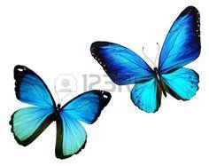 papillon: Deux papillon volant, isolé sur fond blanc